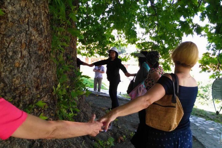 Фотография Телави Обхват Дерева Платана во время Тура из Тбилиси в Кахетию Бодбе Сигнахи Цинандали Телави с компанией Hop on Hop off Tbilisi
